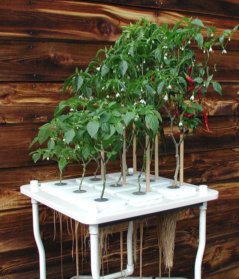 20 Unique and Inspirational Flower Pot Ideas-14