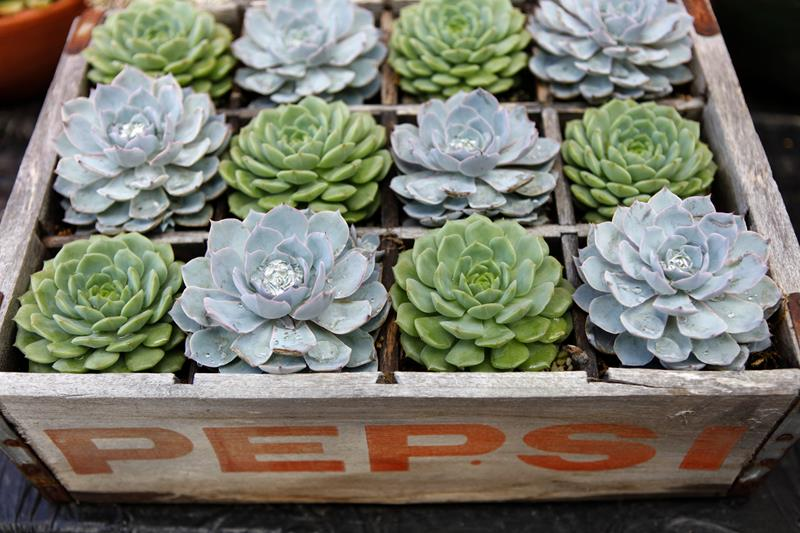 16 Amazing Ways to Enhance Your Garden with Recycled Items-2