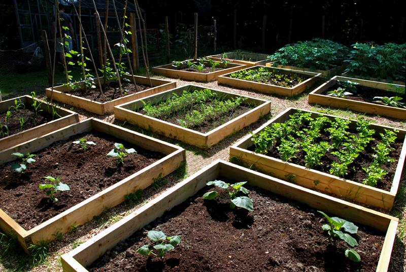 24 Awesome Ideas for Backyard Vegetable Gardens-2
